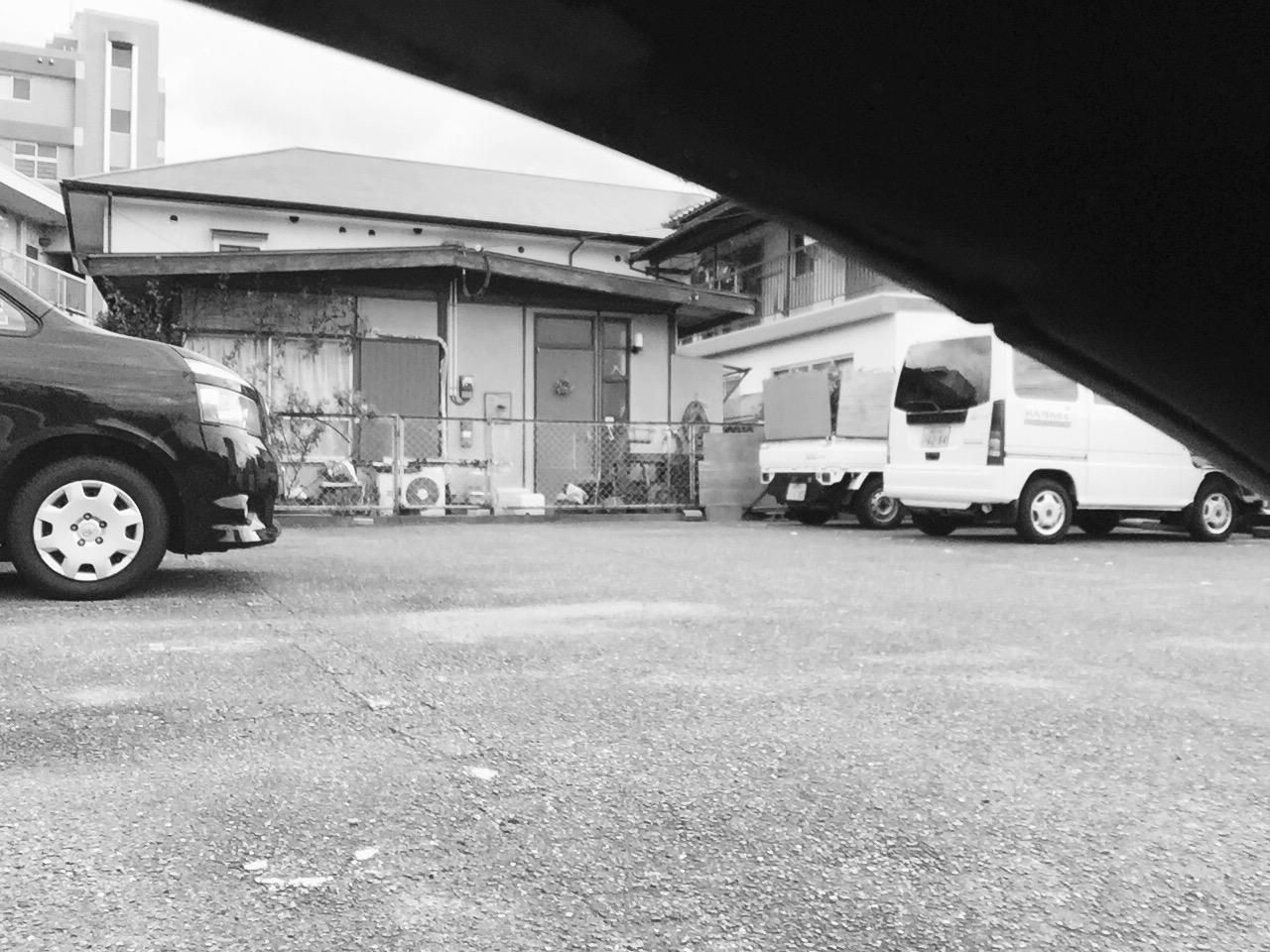 駐車場ねこ